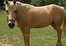 Palomino Mare for Sale in Birmingham, Alabama