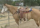 War Cloud - Gelding in Wickenburg, AZ