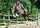 - Gelding in Woodstock, ON