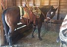 - Stallion in Ainsworth, NE