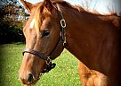 - Gelding in Syracuse, IN