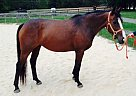Thoroughbred Mare for Sale in North East, Maryland