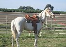 Paint Mare for Sale in Tulare, California