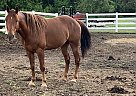 Jack - Gelding in Center City, MN
