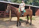 hollywood - Gelding in Magnolia, TX