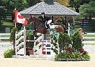 - Gelding in Port, Perry, ON