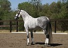 - Stallion in Nevada, NV