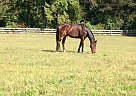 - Gelding in Chesapeake, VA
