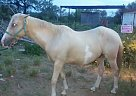 - Stallion in Cotulla, TX
