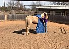 Palomino Gelding for Sale in Oxford, Mississippi