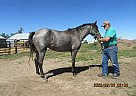 ER Smarty Girl - Mare in Leola, SD