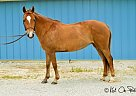 Pony Mare for Sale in Shawnee, Kansas