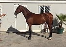 - Stallion in Marbella,