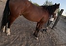 Whiskey - Gelding in Three points, AZ