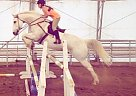 Appaloosa Gelding for Sale in Idaho Falls, Idaho