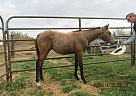 Miss Lil - Mare in Milnor, ND