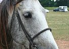 - Stallion in Winder, GA