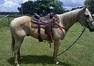 - Gelding in Bushnell, FL