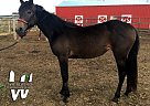 Quarter Horse Mare for Sale in New Underwood, South Dakota