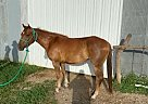 DREAM - Mare in Ethel, MO
