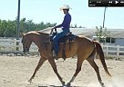 Quarter Horse Gelding for Sale in Ripon, California
