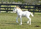 Ginger - Mare in Brooksville, FL