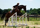 Dave - Gelding in Forest Hill, MD