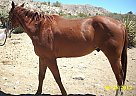 - Stallion in Morongo Valley, CA
