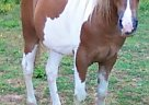 - Gelding in Clinton, TN