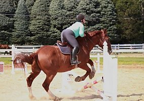 Horses for Sale in New York, NY - Free Ads - HorseWeb