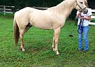 - Gelding in Matawan, NJ