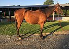 Future - Gelding in North EastNorth East, MD