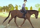 Thoroughbred Mare
