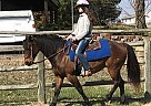 I Am Fancyfree - Gelding in Liberty, MO
