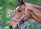 - Gelding in Christiana, PA
