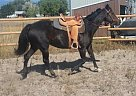 Quarter Horse Mare for Sale in Missoula, Montana