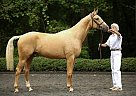 Hanoverian Gelding for Sale in Toledo, Ohio