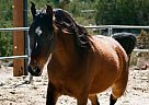- Gelding in Acton, CA