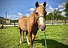 Stan the Man - Gelding in Miami, FL
