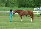 Paint Mare for Sale in 05468, Vermont