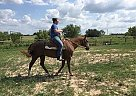 Lil Sister - Mare in College Station, TX