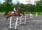 - Gelding in Saugerties, NY