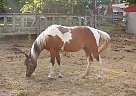 - Stallion in Allegan, MI