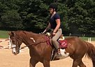 Max - Gelding in Gainesville, GA