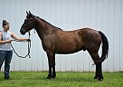 - Gelding in Eau Claire, WI