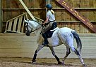 - Gelding in Littleton, MA