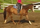 Quarter Horse Mare for Sale in Kutztown, Pennsylvania