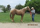 Baron - Gelding in Milnor, ND
