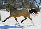 - Gelding in Anderson, OH