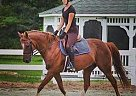 Bud - Gelding in Virginia Beach, VA